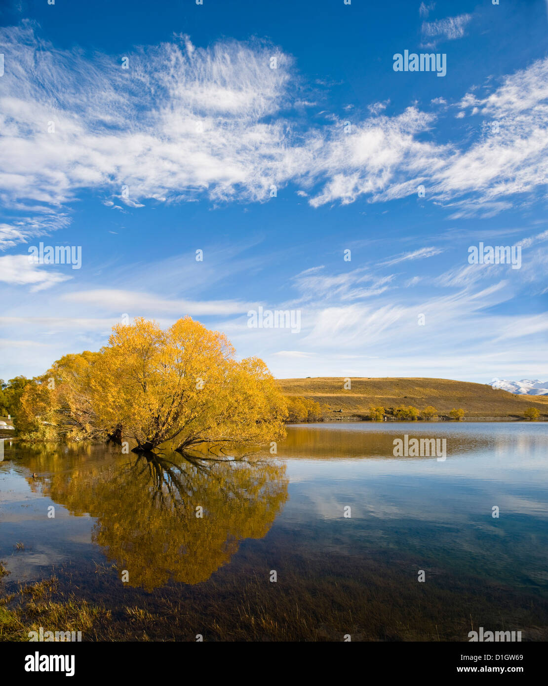 Golden autumn tree reflection in still morning water, Lake Alexandrina, Southern Lakes, Otago Region, South Island, - Stock Image