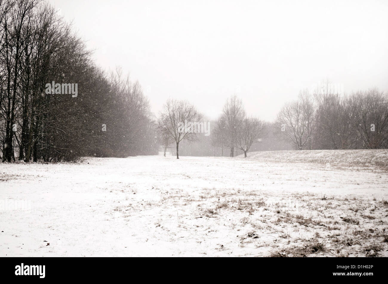 winter landscape during snowing - Stock Image