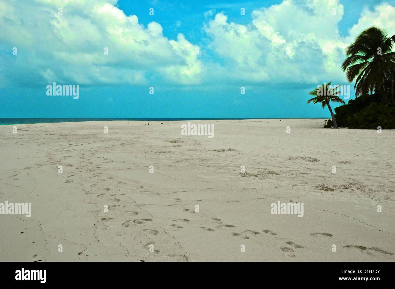 desert island in the maldives - Stock Image