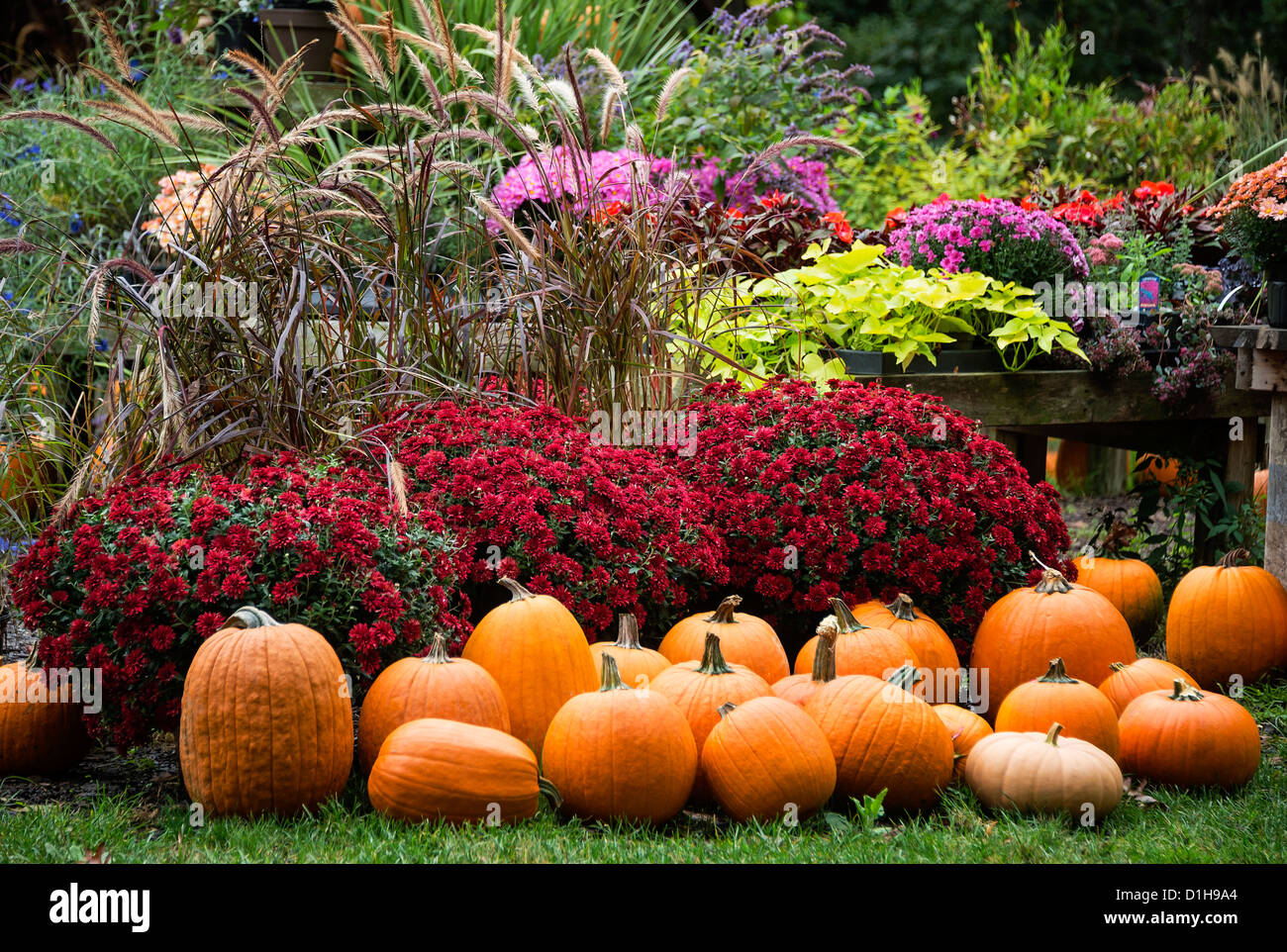 Harvest display at a farmers market - Stock Image