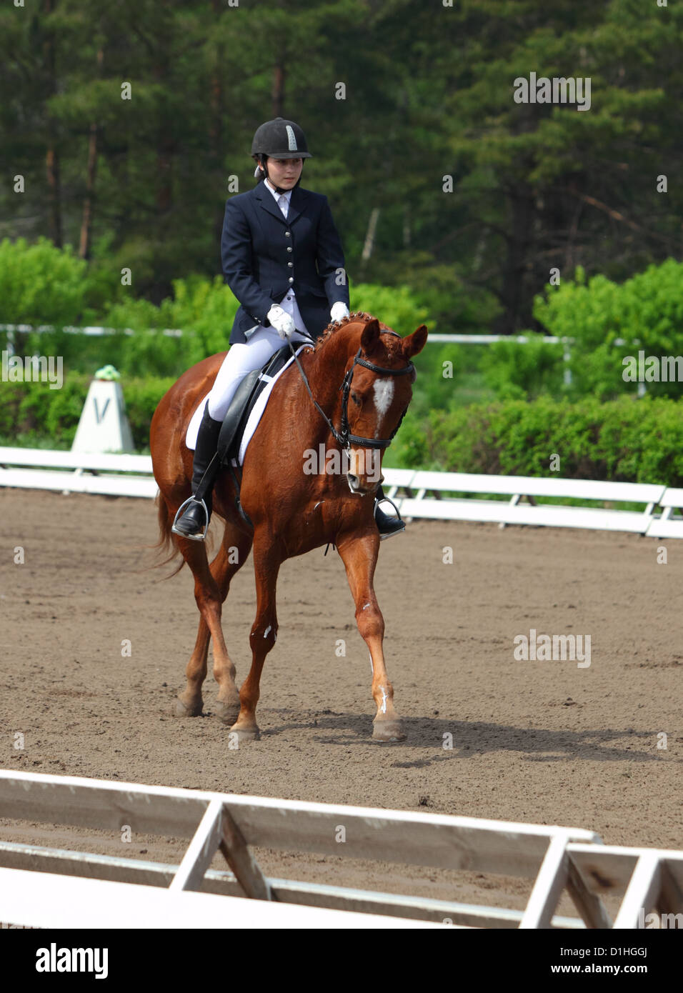 Horse and Rider in an English riding saddle entered in horse Dressage part of an Eventing Competition Event - Stock Image