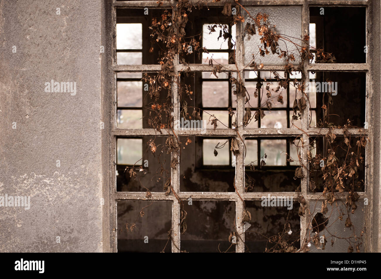 Abandoned house - Stock Image