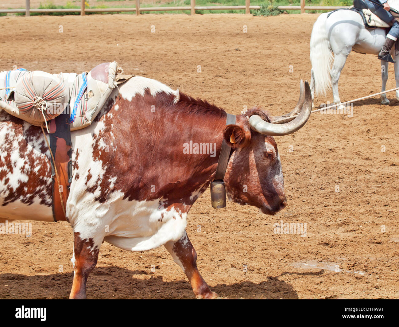 The spanish red bull with burden. Spain, Andalusia - Stock Image