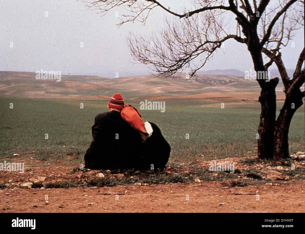 Oktober In Algier   Automne Octobre A Alger   Szene *** Local Caption *** 1992  -- - Stock Image