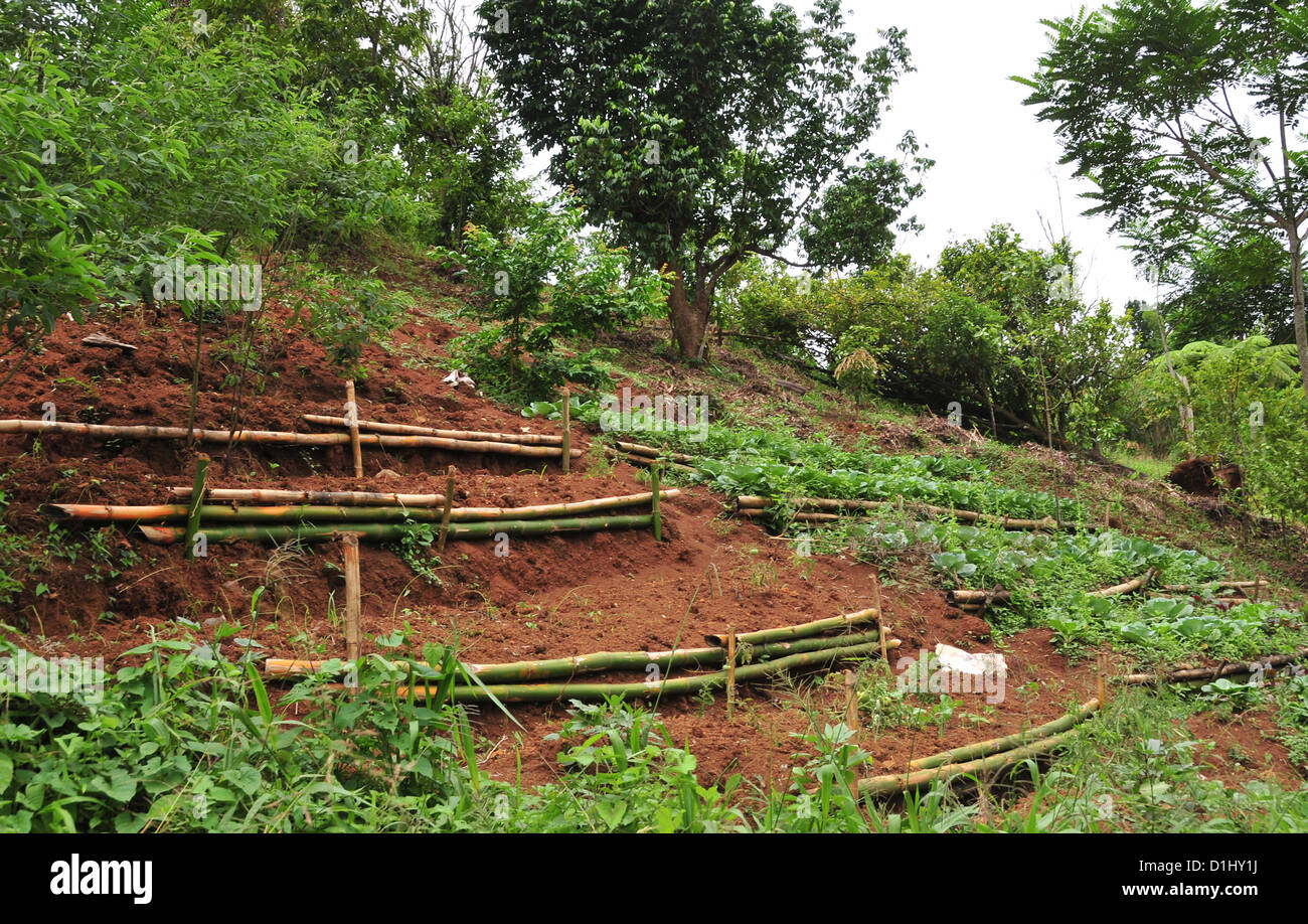 View, from Seven Sisters Waterfall trail, red soil vegetable garden ...