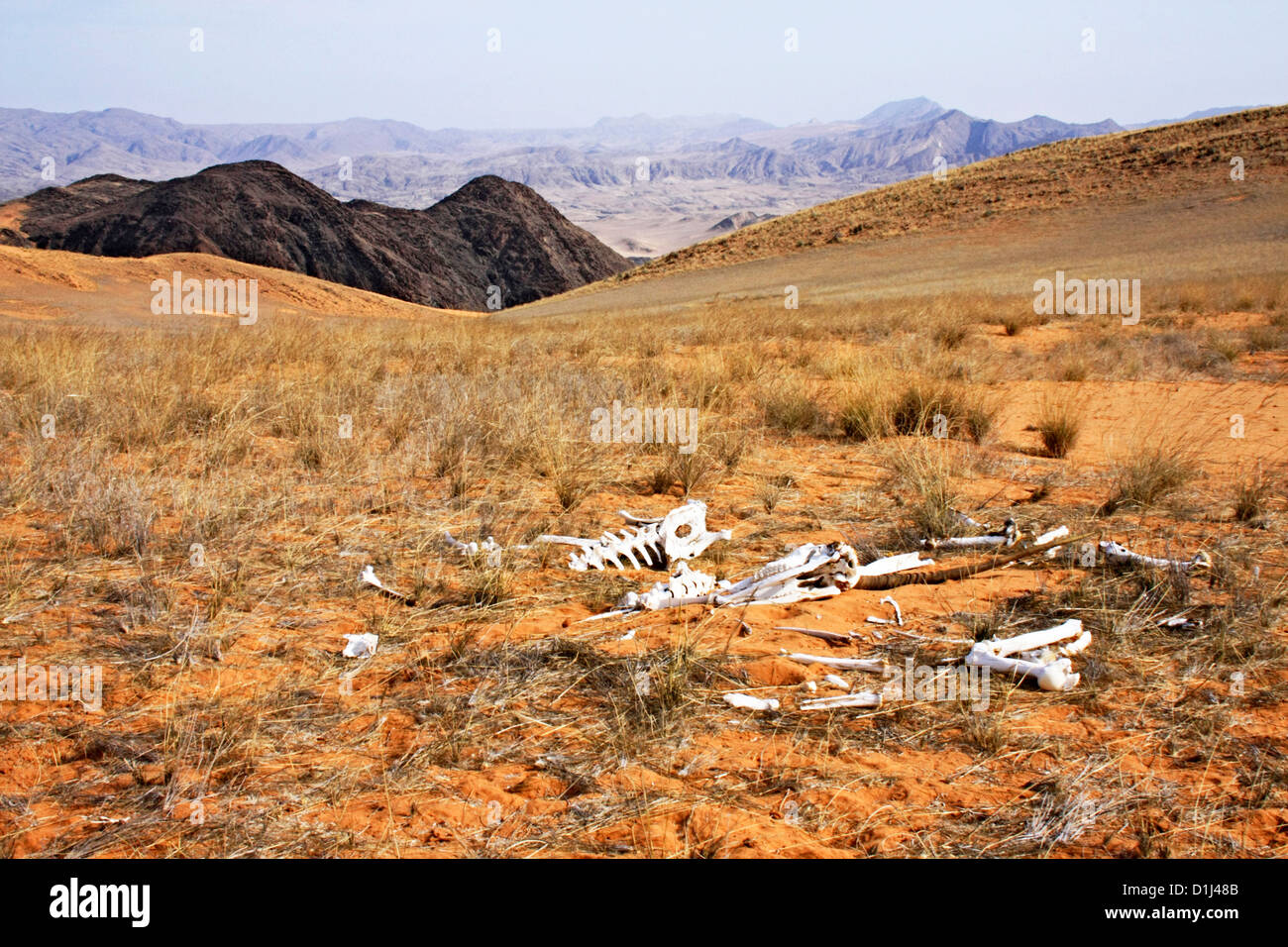 Death in the Hartman Mountains, Northern Namibia - Stock Image