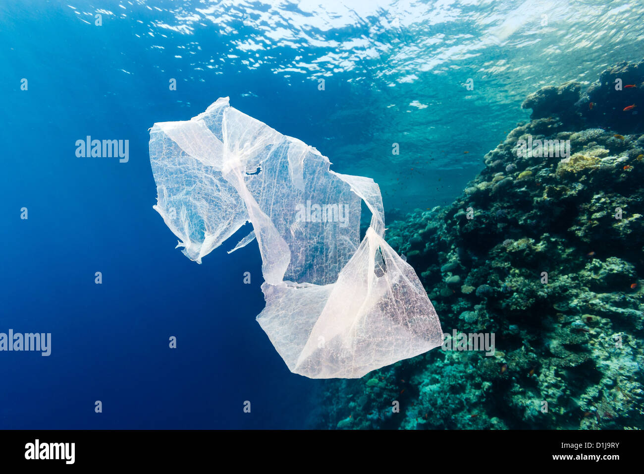 A discarded plastic bag drifts in the ocean next to a tropical coral reef - Stock Image
