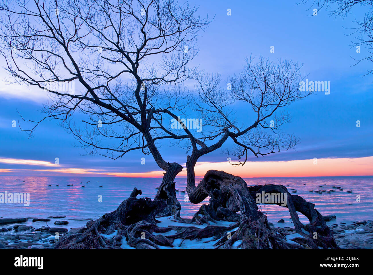 Tree Hanging over Lake in Coronation Park, Oakville, ON, Canada - Stock Image