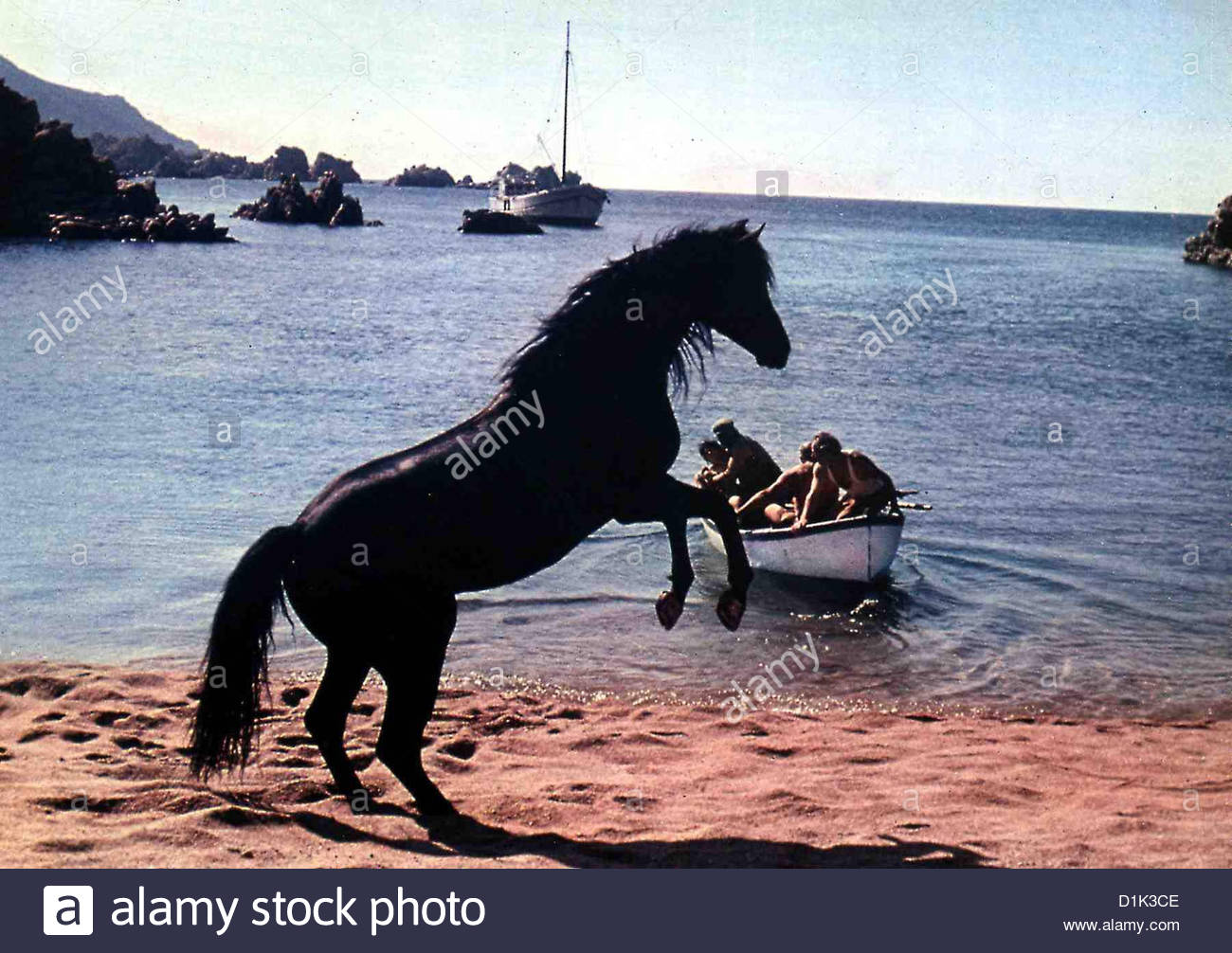 Der Schwarze Hengst   Black Stallion, The   Szene *** Local Caption *** 1979  -- - Stock Image