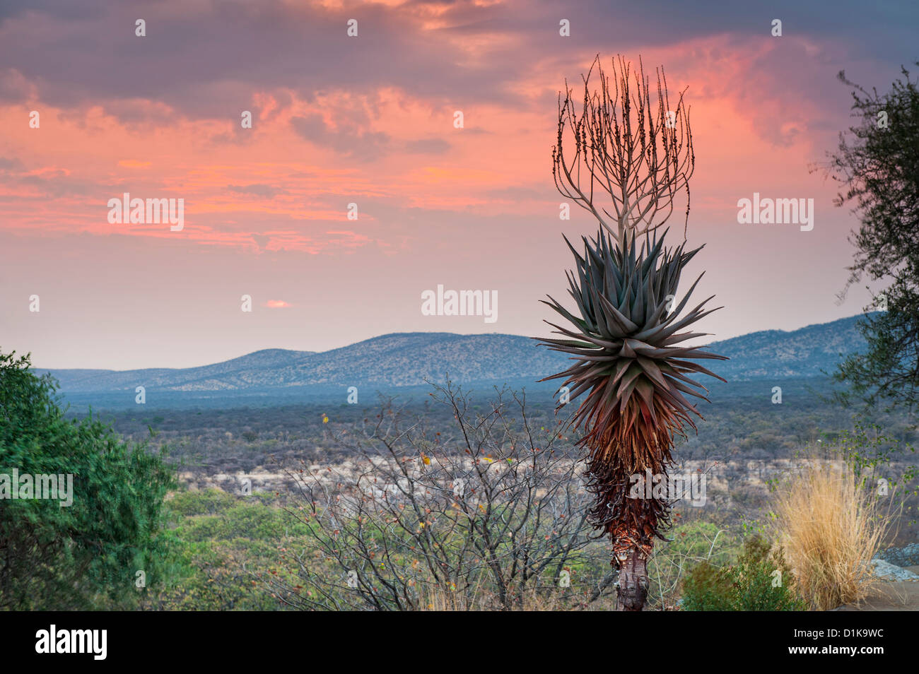 Damaraland sunset with aloe and Fransfontein mountains between Outjo and Khorixas in northwestern Namibia, Africa - Stock Image