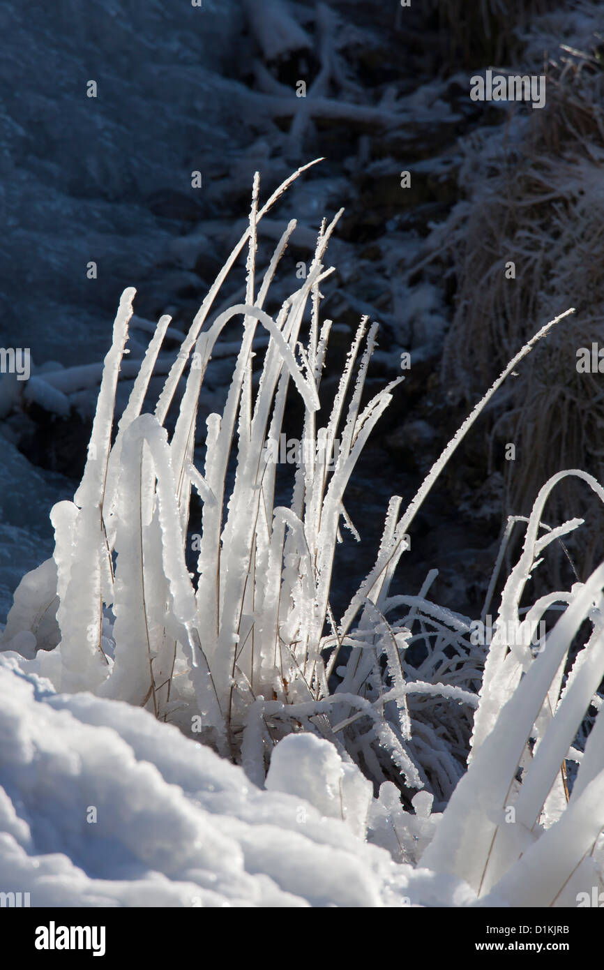 Ice forming along blades of grass near frozen waterfall in winter - Stock Image