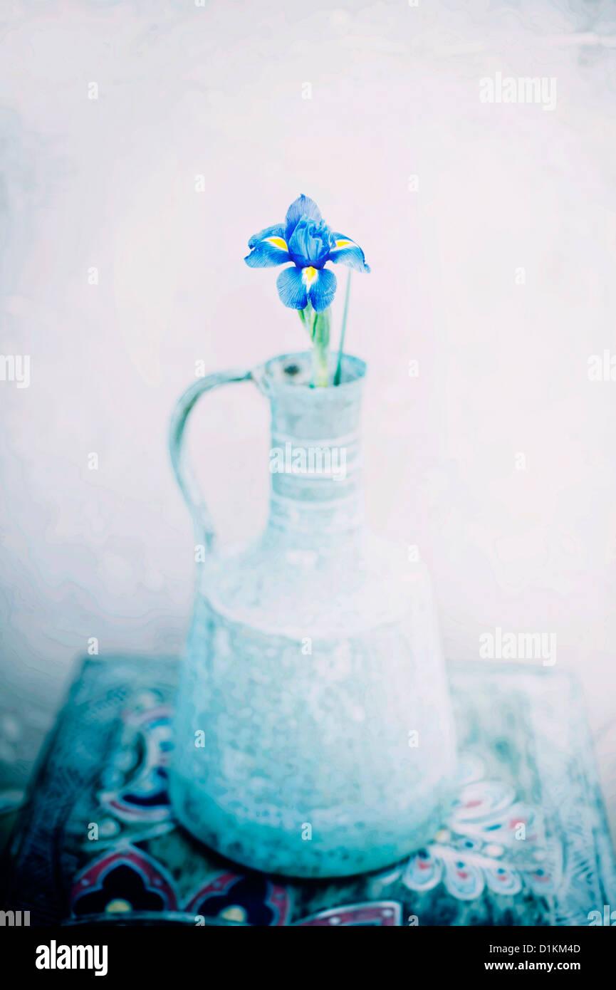 Iris in diffused lighting. - Stock Image