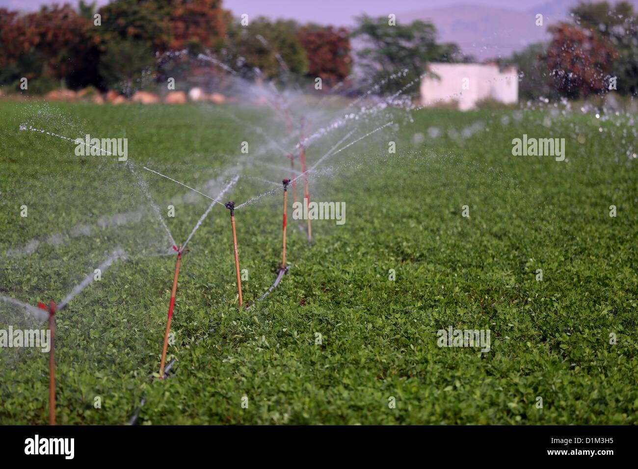 Water sprinkler in a field Andhra Pradesh South India - Stock Image