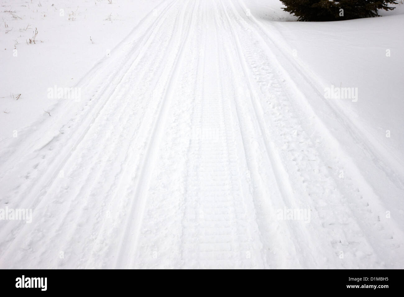 snowmobile tracks in the snow Kamsack Saskatchewan Canada - Stock Image