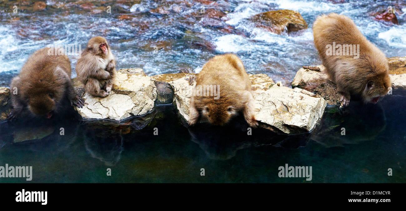 Japanese macaques Macaca fuscata, Nagano, Japan - Stock Image