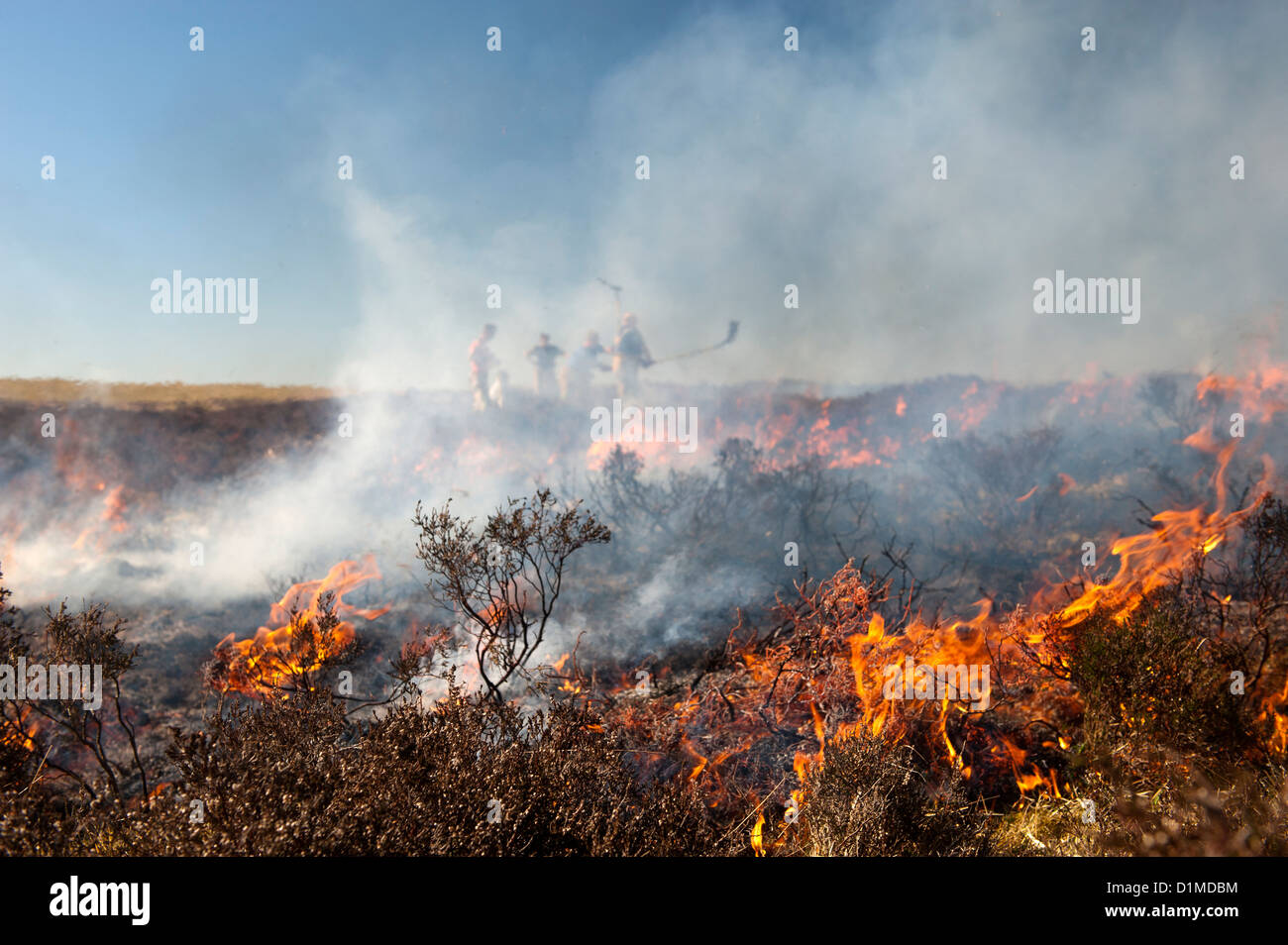 Firemen attemting to control a heather moor burning which had started to blaze out of control, Cumbria, England. - Stock Image