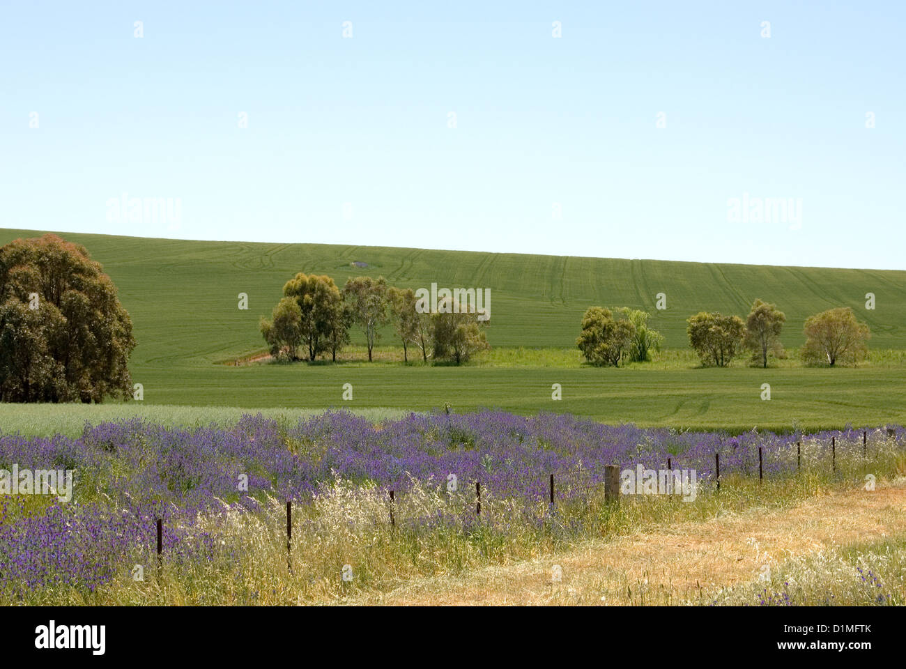 Farmland near Cootamundra, in South-Western New South Wales, Australia - Stock Image