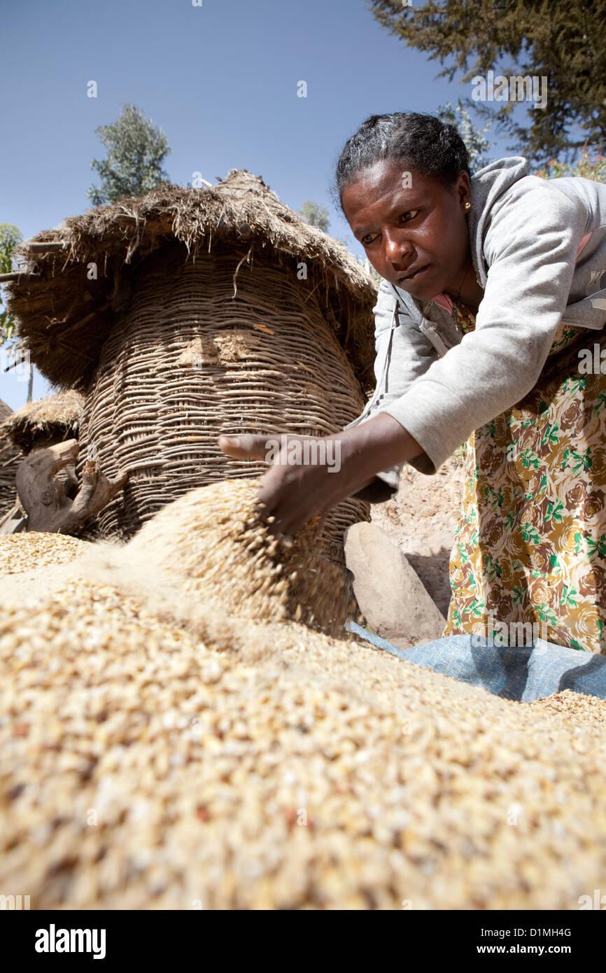 A woman winnows tef grain outside her home in Ankober, Ethiopia. - Stock Image