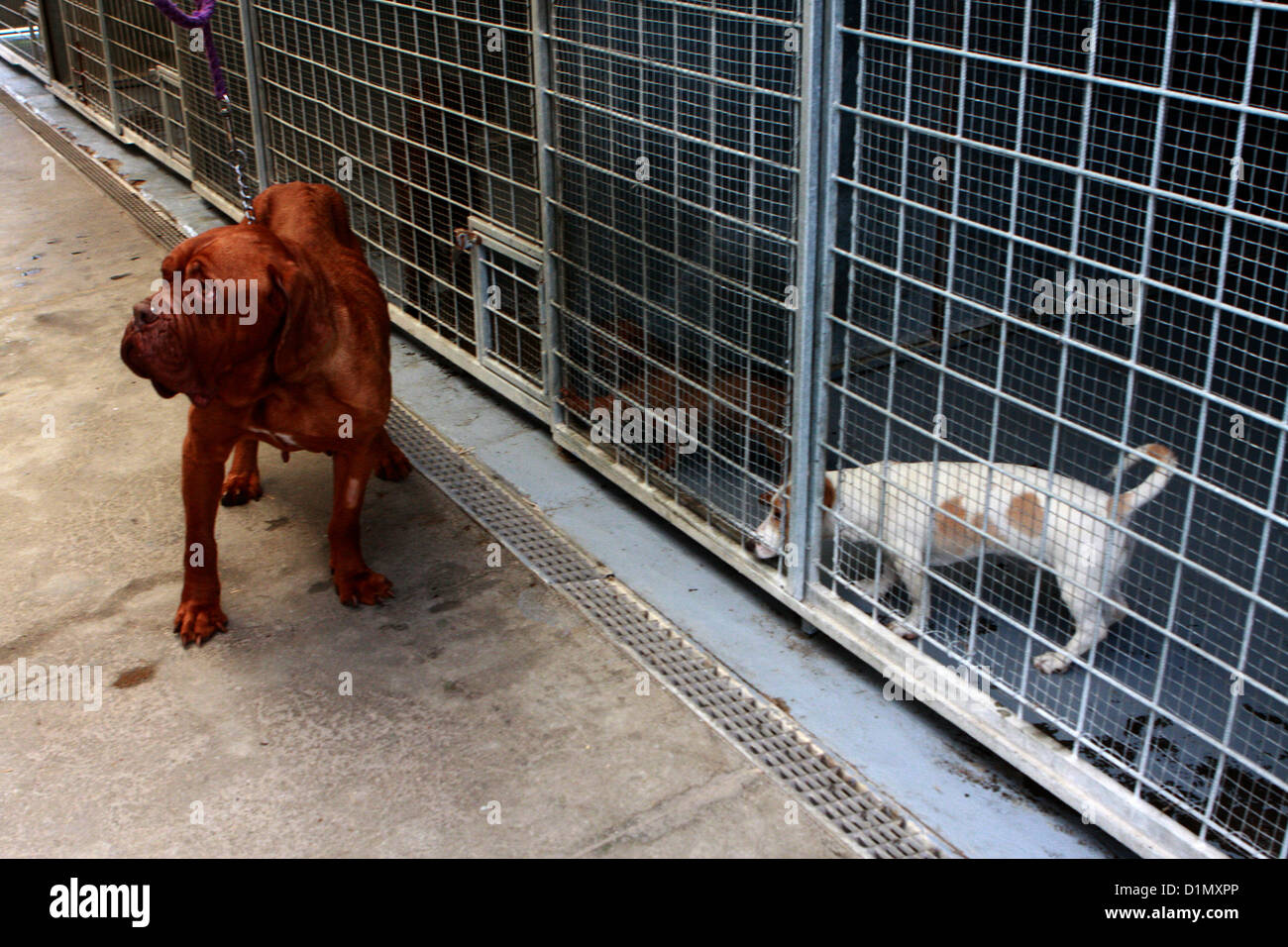 shelter for dogs Czech Republic - Stock Image