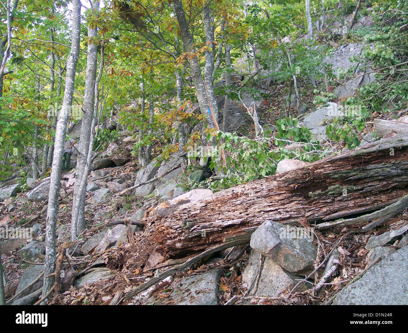 Earthquake Effects Acadia National Park Maine .. East Face Trail Closure - Stock Image