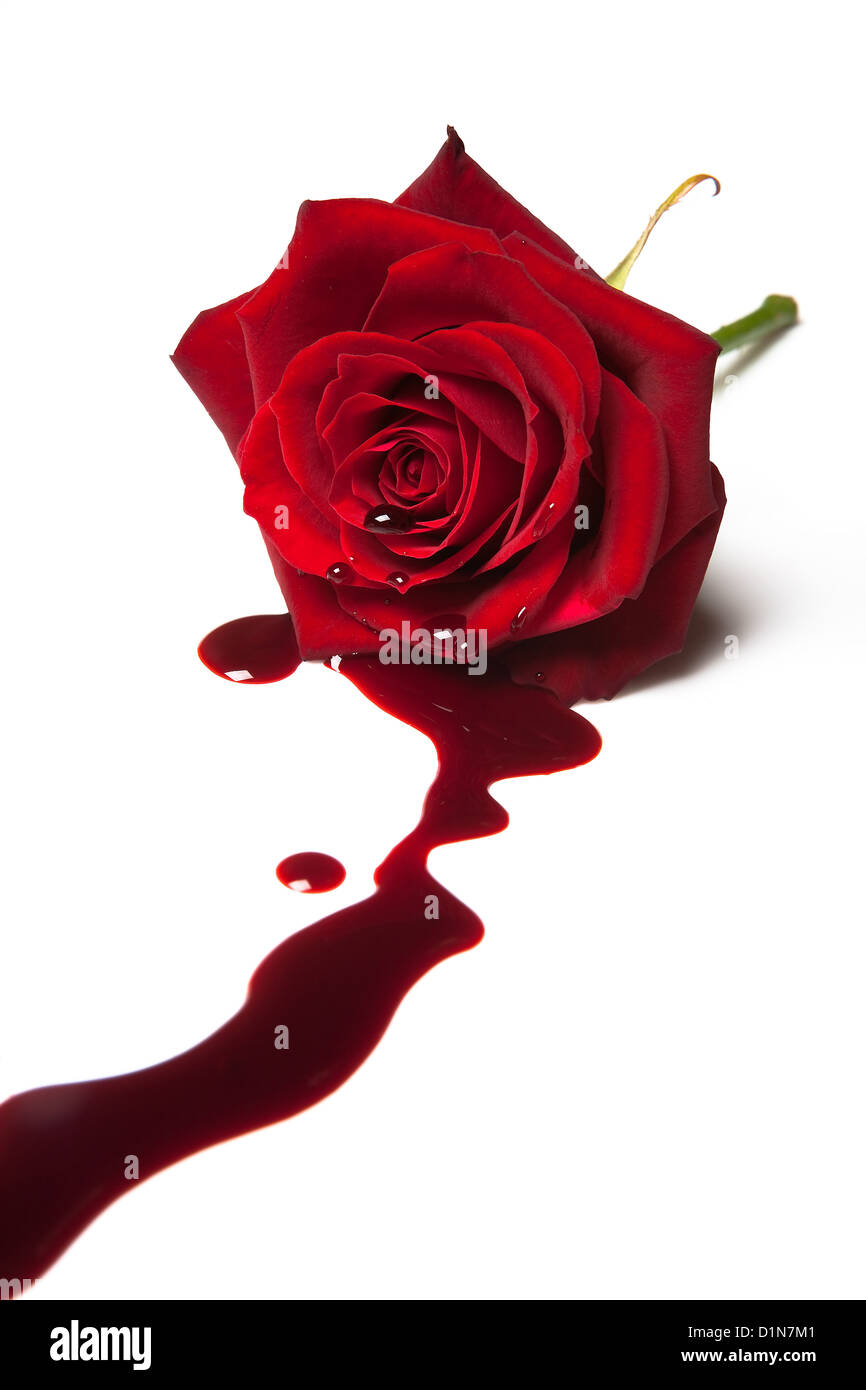 Red rose with blood flowing out of its heart Stock Photo