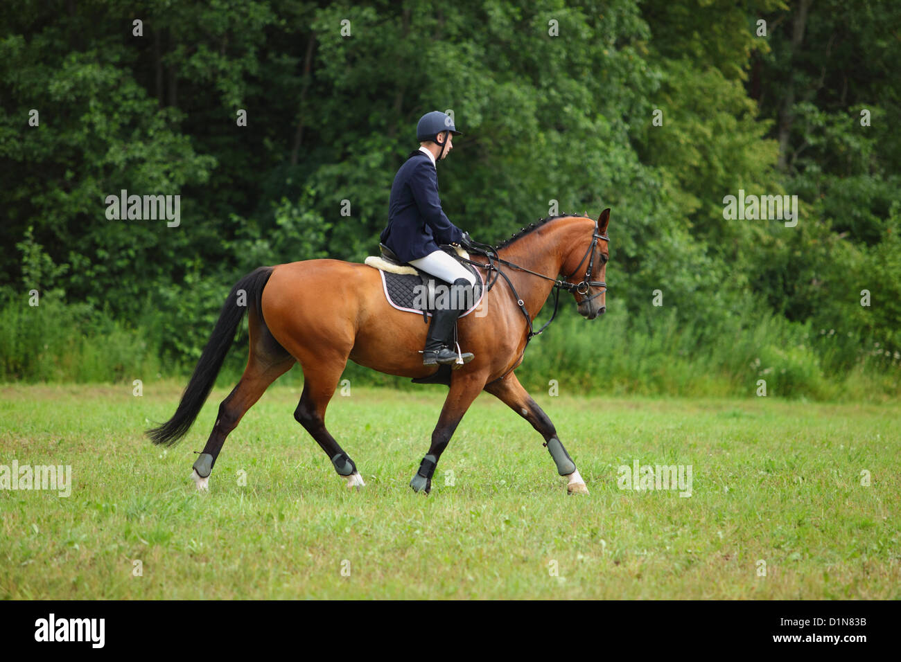 Horse and Rider in an English riding saddle entered in horse Dressage part - Stock Image