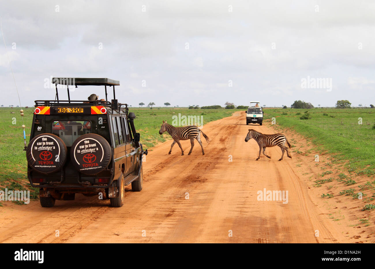 Zebras crossing on safari, Kenya, East Africa - Stock Image