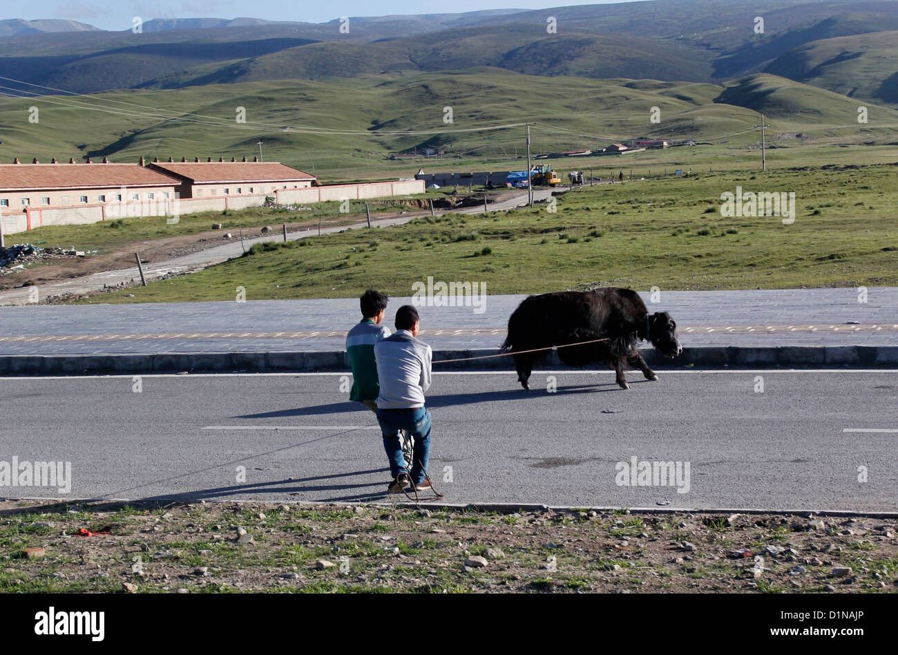 two tibetans catching a mountain yak with lasso in xinjiang county, china - Stock Image