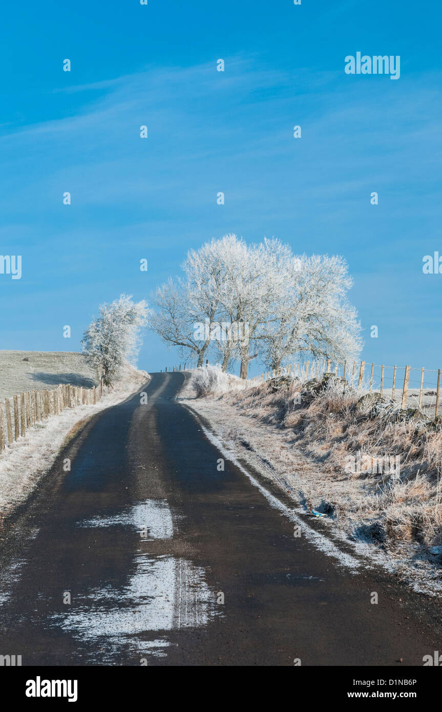 Snow and frost covered tree beside country road nr Elsrickle South Lanarkshire Scotland - Stock Image