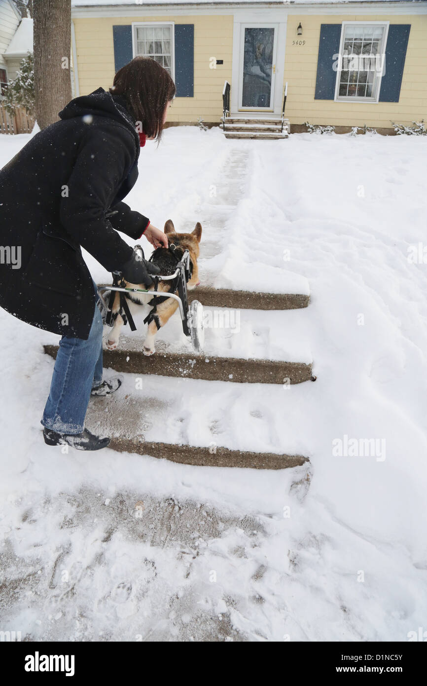A woman helping her disabled dog up the stairs to their house. - Stock Image
