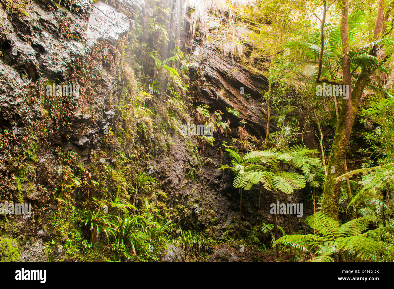 Springbrook National Park, Gold Coast hinterland, Queensland, Australia - Stock Image