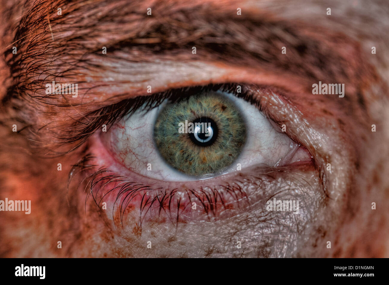 Extreme closeup of a human eye gray  - Stock Image
