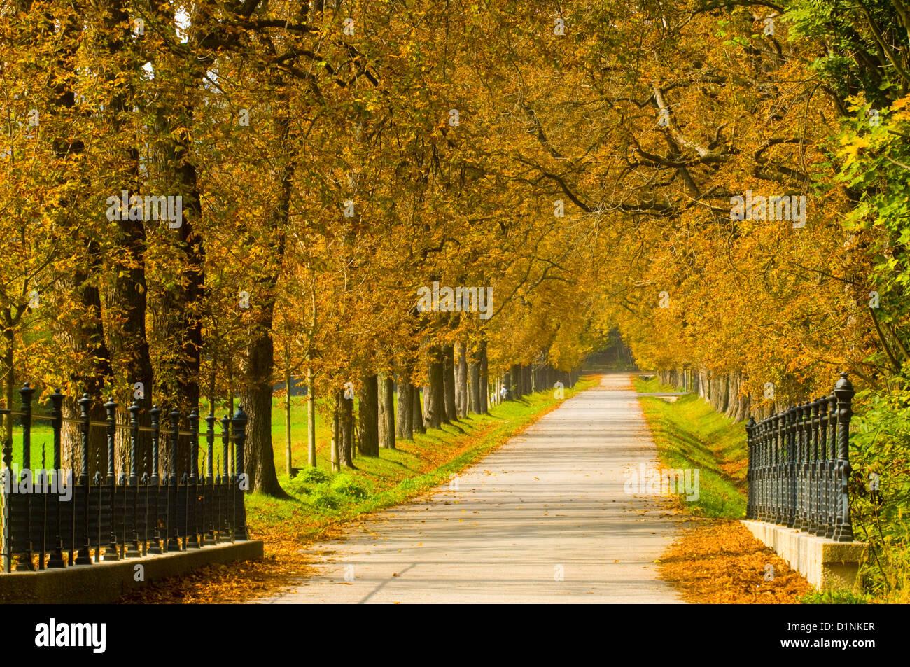 Österreich, Wien 13, Lainzer Tiergarten, ein ehemals eingefriedetes kaiserliches Jagdgebiet in Wien. - Stock Image