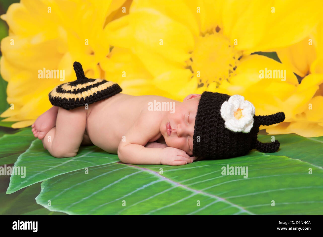 7721c387518 newborn baby girl wearing a black and yellow crocheted bumblebee costume -  Stock Image