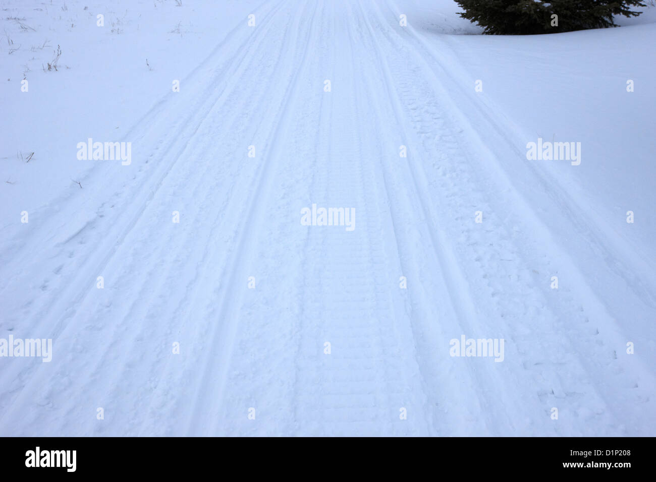 snowmobile tracks in the snow Kamsack Saskatchewan Canada Stock Photo