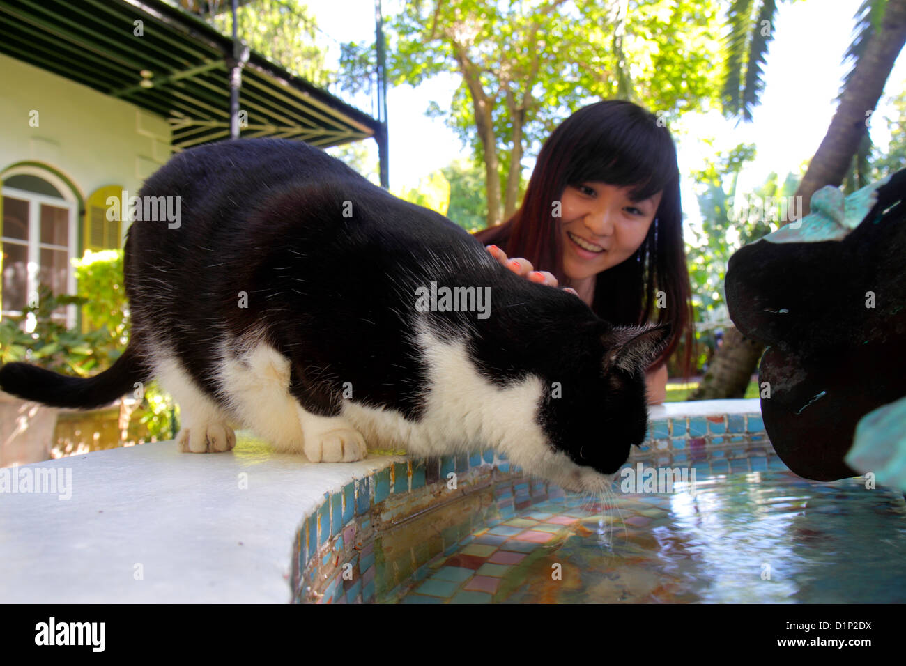 Florida Key West Florida Keys Whitehead Street The Ernest Hemingway Home & and Museum cat Asian woman reaching for Stock Photo
