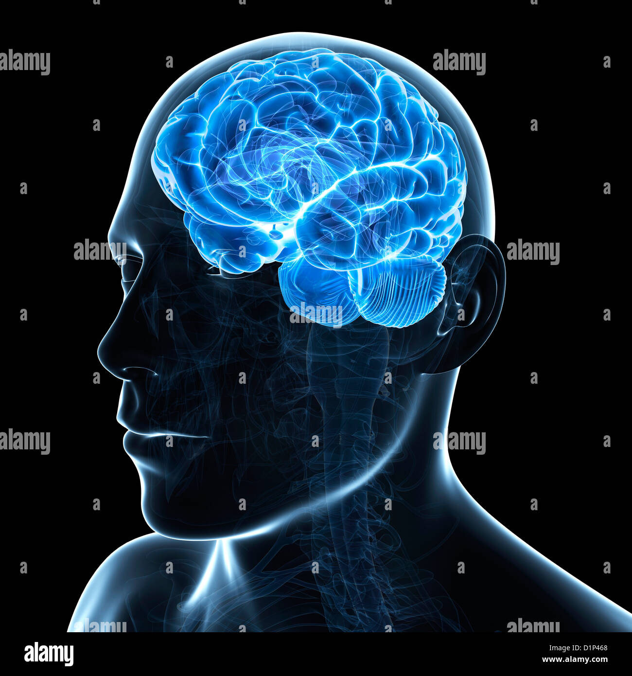 Male brain, artwork - Stock Image
