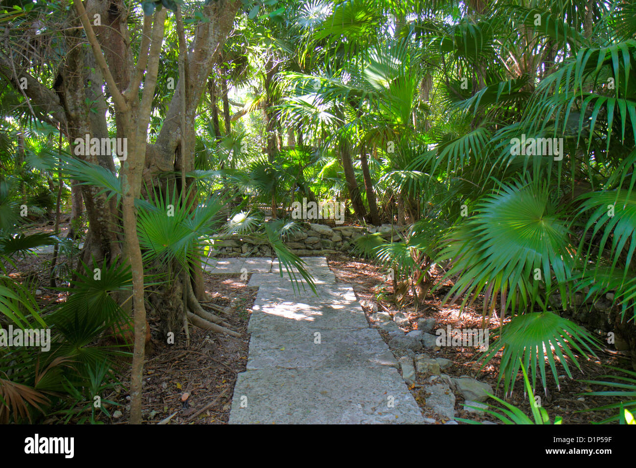 Florida Key West Keys Tropical Forest And Botanical Garden Frost Free Nature Trail