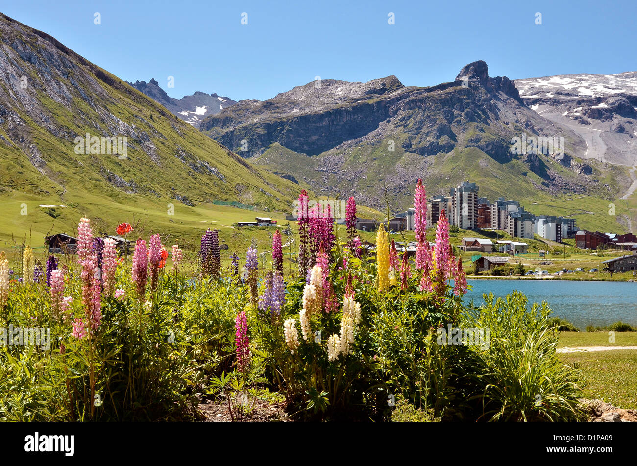 Tignes le Lac with lupine flowers and Tignes-Val Claret in the background. Tignes is a commune in the Tarentaise Stock Photo