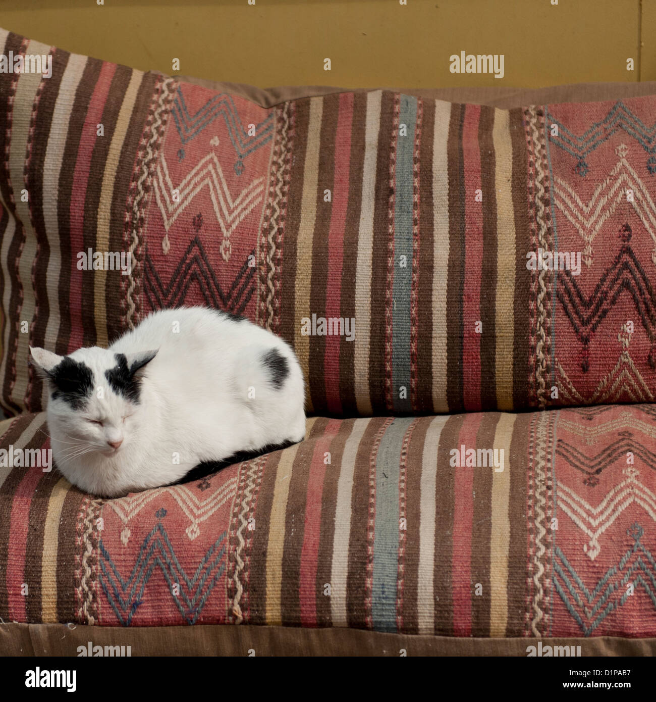 Cat sitting on a couch, Istanbul, Turkey - Stock Image