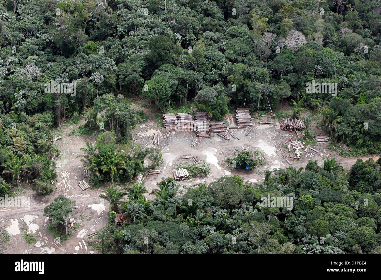 Amazon rain forest clearance for agriculture Illegal cut log hidden in forest from IBAMA - Brazilian Environmental - Stock Image