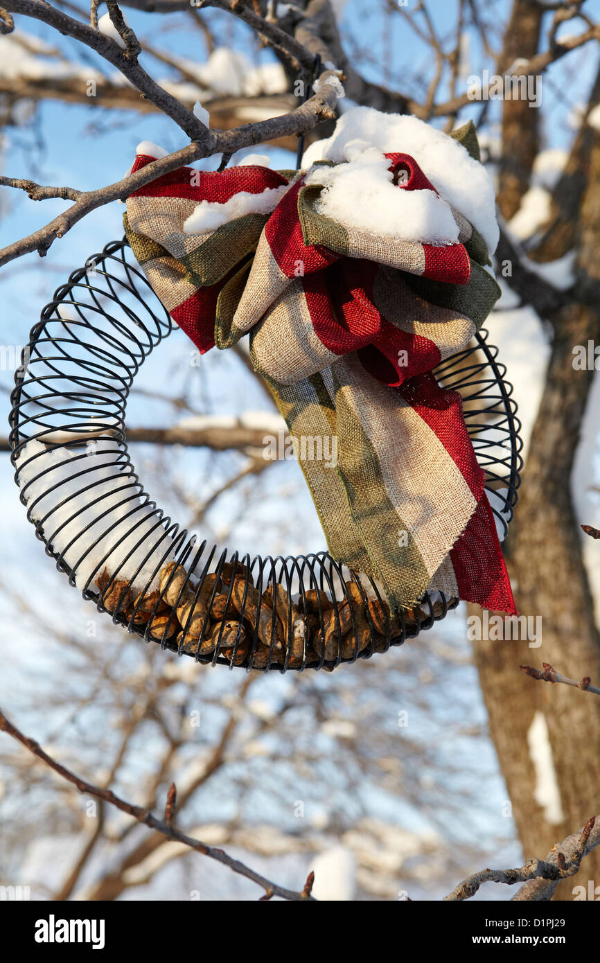 Bird feeder ring filled with peanuts - Stock Image