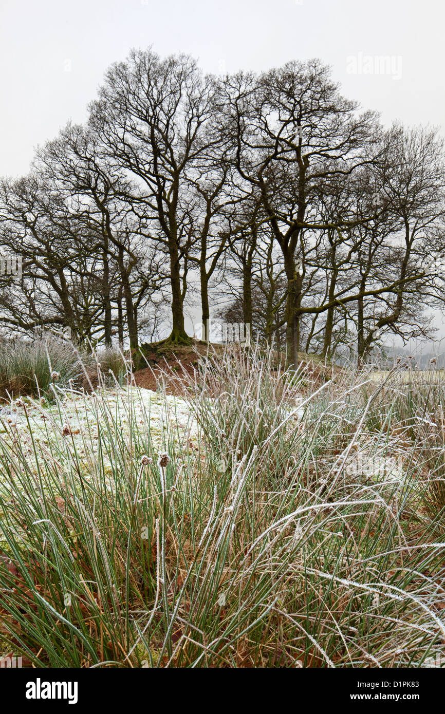Wooded Copse in winter frost near Elterwater, Great Langdale, Lake District National Park, Cumbria, England, UK Stock Photo