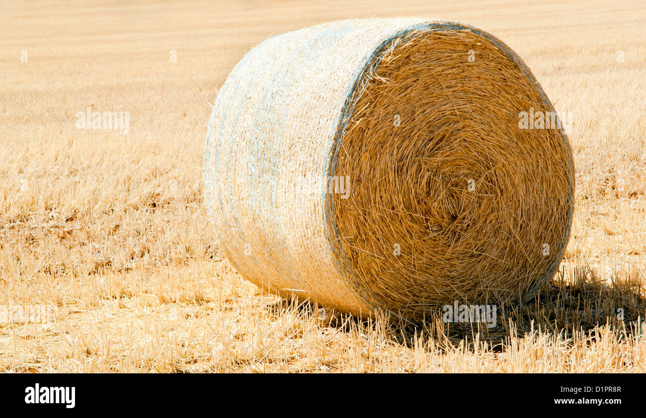 Harvest time with hay bales in the summer sun - Stock Image