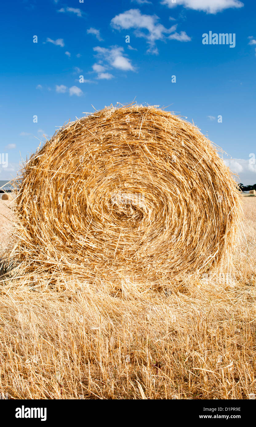 Bales of hay in the fields in summer time harvest - Stock Image