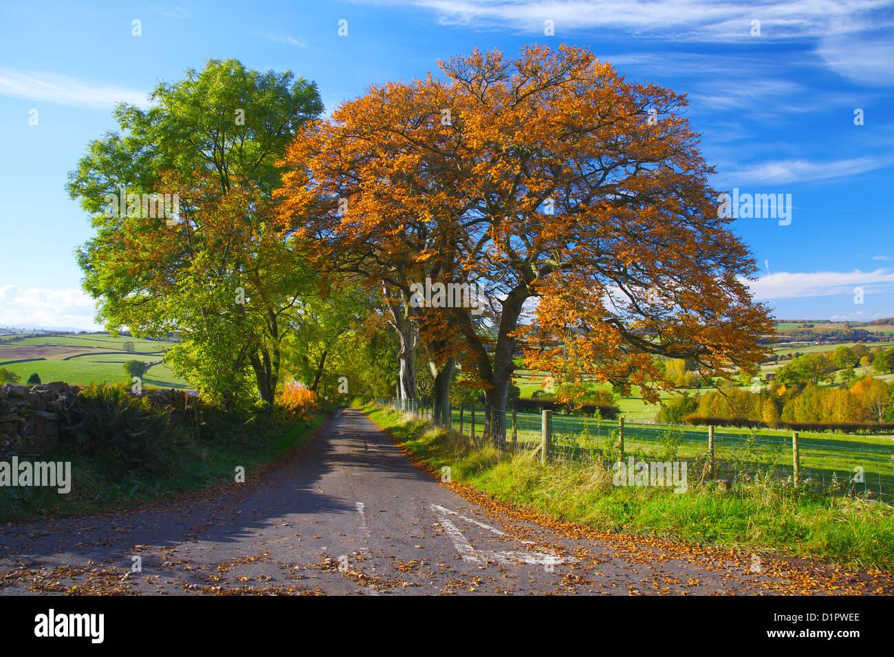 Road junction autumn trees.Eden Valley, Cumbria, England UK - Stock Image