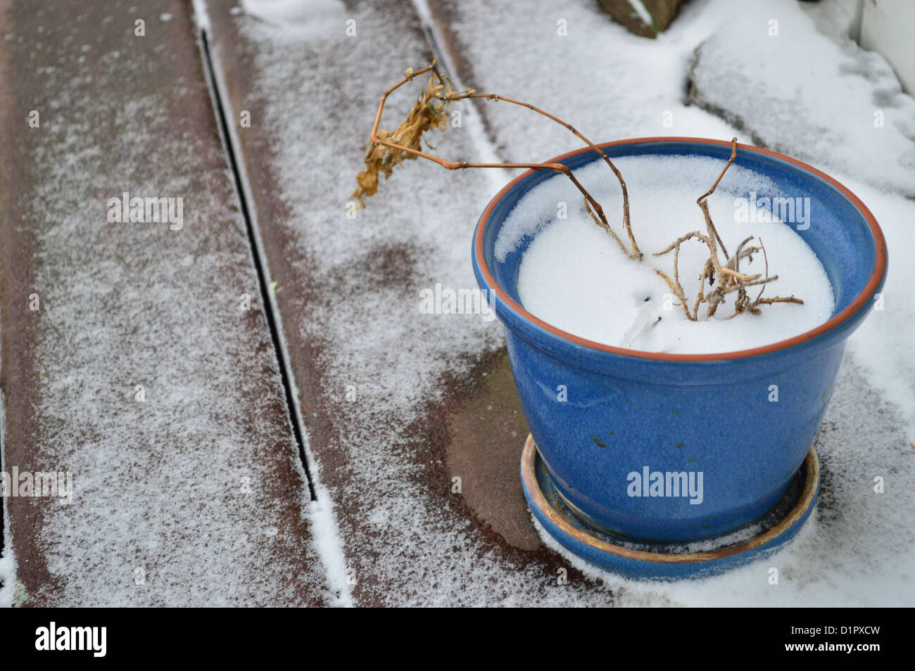 Dead plant in blue ceramic pot with snow - Stock Image