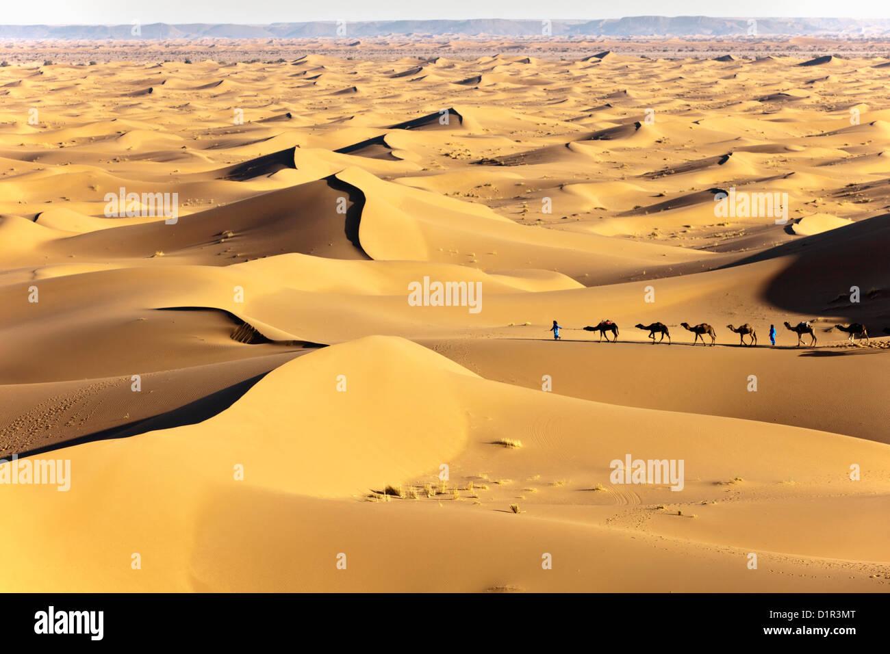 Morocco, M'Hamid, Erg Chigaga sand dunes. Sahara desert. Camel drivers and camel caravan. Stock Photo