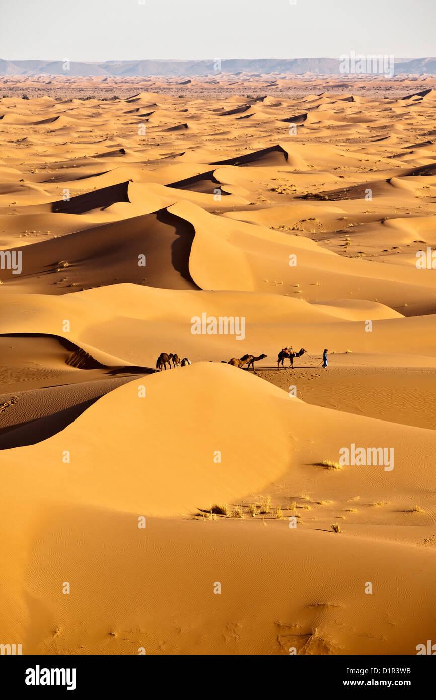 Morocco, M'Hamid, Erg Chigaga sand dunes. Sahara desert. Camel driver and camel caravan. - Stock Image
