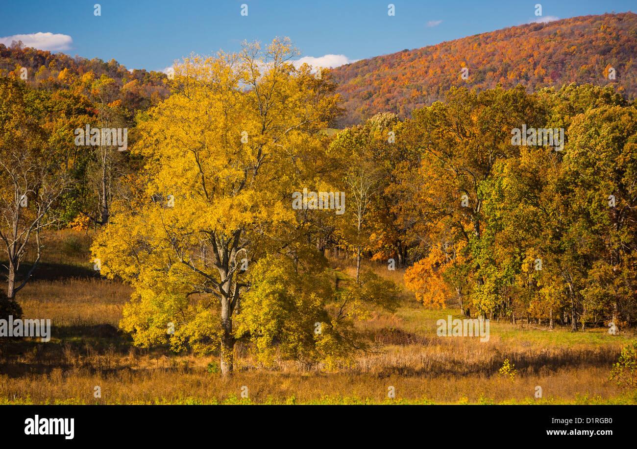 DELAPLANE, VIRGINIA, USA - Autumn foliage on trees at Sky Meadows State Park. - Stock Image